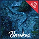 Calendar 2022 Snakes: Snakes Official 2022 Monthly Planner, Square Calendar with 19 Exclusive Snakes Photoshoots from July 2021 to December 2022