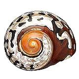 Hengqiyuan Sudáfrica Esc Natural Conc 6-7 CM para DIY Decoración De La Boda Tanque De Peces Decoración del Paisaje Decoración del Hogar Aquarium Sandy Beach,A