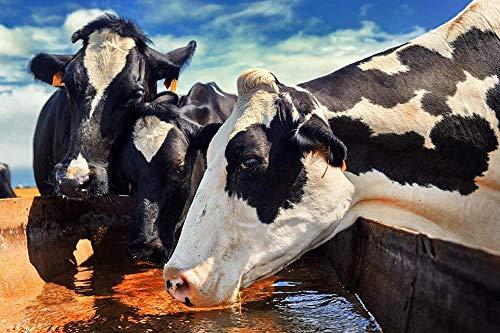 DFGJ Rompecabezas de Madera clásico 1000 Piezas Rompecabezas para Adultos Rompecabezas de Madera Vaca Agua Potable Arte DIY Juego de Ocio Juguete Divertido Regalo Adecuado Familia Amigos 75X50CM