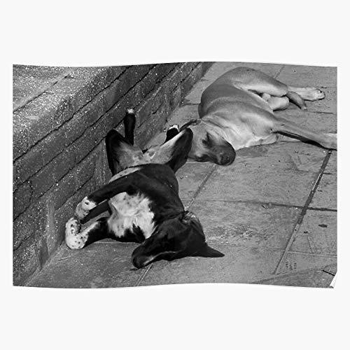 Dog Art Lazydays Lazy Dogs Sleep Blackandwhite Animals El mejor y más nuevo póster para la sala de decoración del hogar de arte de pared