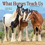 What Horses Teach Us 2021 Mini Wall Calendar