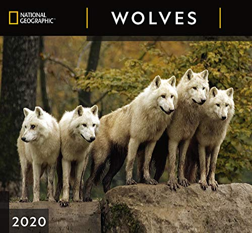 National Geographic Wolves 2020 Wall Calendar