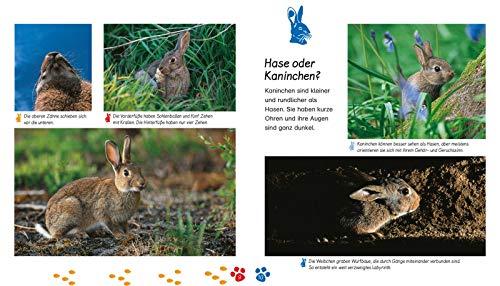 Das Kaninchen (Meine große Tierbibliothek) - 4