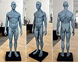 Bestdental New 30cm Height Human Anatomical Anatomy Skull Head Body Model Muscle Bone