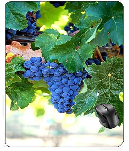 Aventn Merlot Trauben Wein Obst Ernte Cluster Weinrebe Weingut Weingut Mauspad