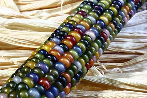 20 doux arc-en-maïs Semences de maïs grains colorés Céréales Graines de haute qualité des légumes pour jardin Facile à cultiver Livraison gratuite Jaune