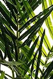 Sarah B XXL Areca Palme. Farnpalme, Kokospalme JWS2255 Riesige künstliche 140cm hohe Kunstpflanze, Kunstblume, Kunstbaum, Zimmerpflanze künstlich - 2