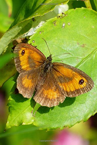 Meadow Brown Butterfly Maniola jurtina Insect Journal: 150 Page Lined Notebook/Diary