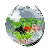 Candora  originale, acquario acrilico appeso a parete, acquario, vaso pianta, acquario bolla arredamento