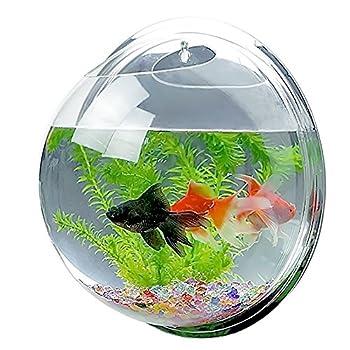 Matériau acrylique - Ne casse pas facilement comme le verre - Durable pour une utilisation prolongée. Très haute transparence - Emplissez d'eau et ajoutez-y un poisson - Avec la lumière du soleil, l'aquarium sera éblouissant. Facile à utiliser : alig...