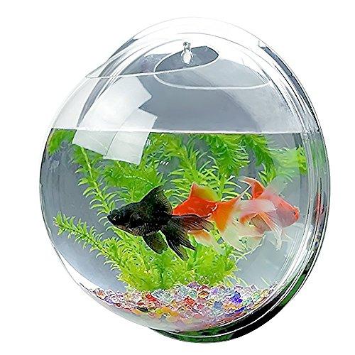 Candora ™ originale, acquario acrilico appeso a parete, acquario, vaso pianta, acquario bolla arredamento