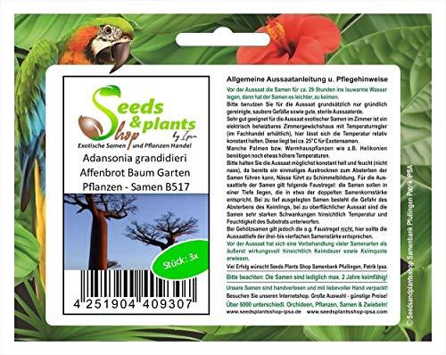 Stk - 3x Adansonia grandidieri Affenbrot Baum Garten Pflanzen - Samen B517 - Seeds Plants Shop Samenbank Pfullingen Patrik Ipsa