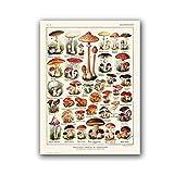 N / A Póster de Tabla de Setas ilustración botánica Vintage impresión de micología Arte de Pared Lienzo Cuadros cabaña Cocina Decor 50x60cm Sin Marco