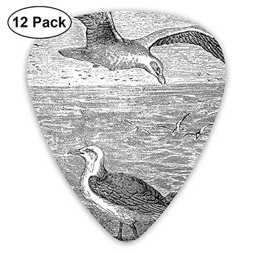 Plektrum 351 Form Klassische Gitarre Picks Seagull Graphic Plectrums Instrument Standard Bass 12er Pack