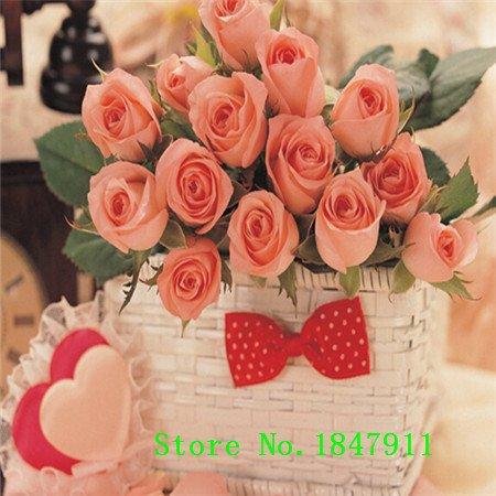 Grande vente 100 Bricolage Jardin & balcon kicthen semences fleur mixte fruit légume bonsaï vous donnent une vie heureuse culture facile