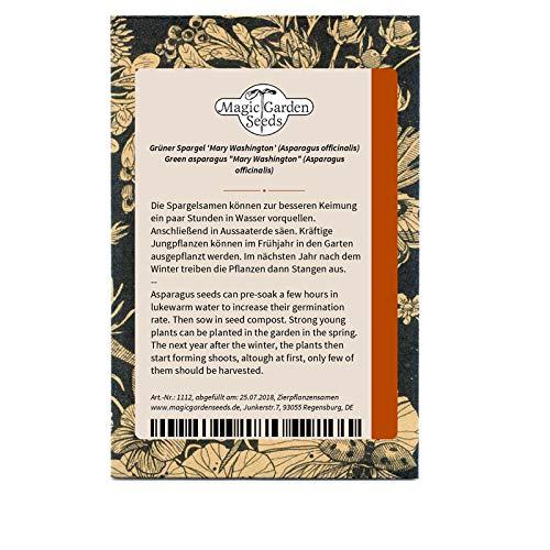 Robuster grüner Spargel 'Mary Washington' (Asparagus officinalis) 100 Samen