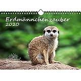 Erdmännchenzauber DIN A4 Kalender 2020 Erdmännchen - Seelenzauber