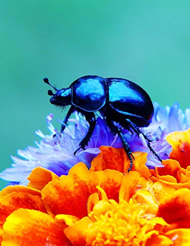 Notebook: Forest Beetle Flowers Petals insect larva species weevil firefly