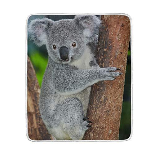 CPYang Cute Animal Koala Coperta in Microfibra Morbida Gift Travel Divano Letto Coperte 127x 152cm per Bambini Boy Ragazze Donne Uomini
