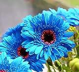 200 Seeds Mixed Garden Seeds Flower Native Texas Indian Blanket Wildflower Perennial Easy to Grown