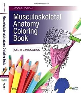 Get Musculoskeletal Anatomy Coloring Book 2e By Joseph E Muscolino DC EBOOK