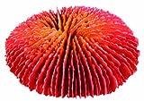 TRIXIE Set de Corales, 10-13 cm, Peces