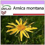 SAFLAX - Heilpflanzen - Echte Arnica - 40 Samen - Arnica montana
