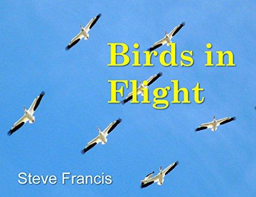 Birds in Flight (World of Birds Book 1) (English Edition)