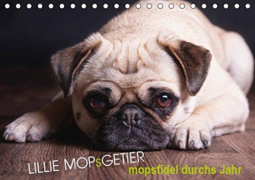 Lillie Mopsgetier - mopsfidel durchs Jahr (Tischkalender 2019 DIN A5 quer): Lillie das Mopsmädchen begleitet Sie im farbenfrohen, abwechslungreichen ... (Monatskalender, 14 Seiten ) (CALVENDO Tiere)