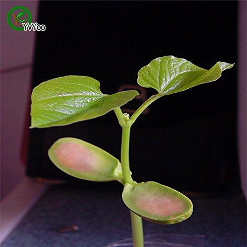 Graines de légumes Magic Bean Graine de plantes cadeau Growing H045 de message mot amour bricolage jardin