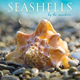 Seashells 2021 Wall Calendar