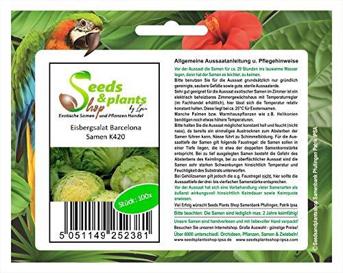 Stk - 100x Eisbergsalat Barcelona - Samen Gemüse Salat Pflanze Küche Garten K420 - Seeds Plants Shop Samenbank Pfullingen Patrik Ipsa