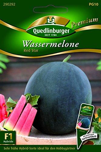 Melonen Wasser- Red Star - Citrullus lanatus L. QLB Premium Saatgut sonstige Gemüsesamen