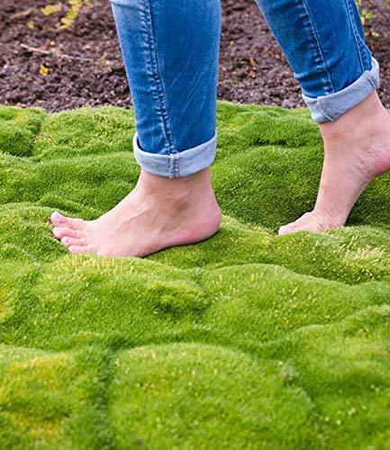 AIMADO Samen-50 Pcs Moos Samen Moos Sporen Bodendecker für Beet Bonsai Garten mehrjährig Gras Immergrün winterhart Kugelmoos Bollenmoos