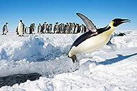 大人のためのジグソーパズル5000ピース-雪の中で遊ぶペンギンのグループ-DIY木製パズルキッズおもちゃ72x42in