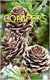 Conifers: Conifers in Photographs (English Edition)