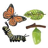 Immagine 2 perfeclan ciclo di vita animali