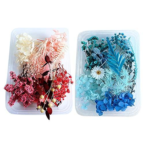 Flores Secas Manualidades Navidad flores secas  Marca IWILCS