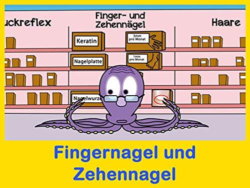 Fingernagel und Zehennagel (Grundschule)
