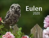 Eulen - Kalender 2020 - Weingarten-Verlag - Wandkalender mit eindrucksvollen Aufnahmen - 44 cm x 34 cm