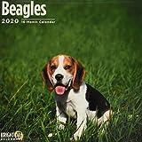 Beagles Wall Calendar 2020 (Dog Breeds)