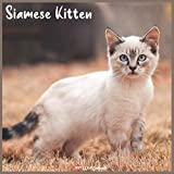 Siamese Kitten 2021 Wall Calendar: Official Siamese Kitten Calendar 2021, 18 Months