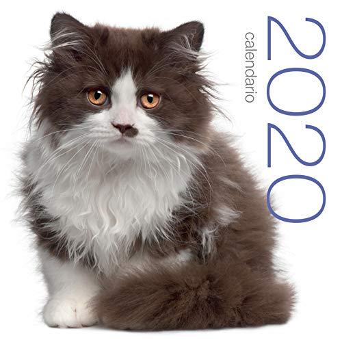 Gatos. Calendario 2020 de pared.