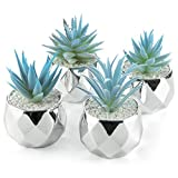 Artificial Succulents - Blue Plants...