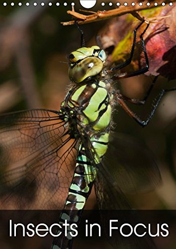 Insects in Focus 2019: Twelve beautiful photographs of insects (Calvendo Nature)