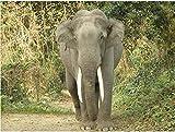 Pintura Por Números Para Adultos Con Pinceles Y Pinturas Para Niños Seniors Junior Principiante Acrílicos Kits De Pintura Sobre Lienzo Decoración Para El Hogar Elefante De La Selva 16*20 Pulgada