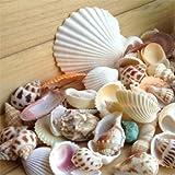 bodhi2000, conchiglie di mare assortite per attività manuali, giardino, acquario, decorazioni, oggetti di scena per fotografie, 100 g