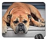 Yanteng Alfombrillas de ratón - Perro Animal Continental Bulldog Animal doméstico Retrato