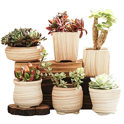 winemana 6 Pcs Set 3 Inch Ceramic Succulent Plant Pot, Wooden Pattern Succulent Planter Container Bonsai Cactus Pots