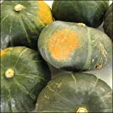 かぼちゃ 訳あり 北海道 10kg詰(4-10玉入)